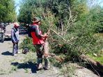 babinsa-dan-warga-bersihkan-pohon-tumbang-di-syiah-kuala.jpg