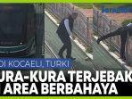 beginilah-aksi-juru-kemudi-turki-kepada-kura-kura-yang-tersangkut-di-rel-trem.jpg
