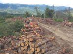 bongkahan-kayu-pinus-dilokasi-sawmill-pengelolaan-kayu_20171126_071758.jpg