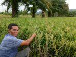 bupati-abdya-akmal-ibrahim-juga-dikenal-sebagai-petani.jpg
