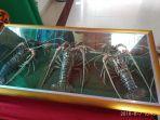 cangkang-lobster_20180808_094645.jpg