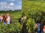 demi-konten-dan-foto-estetik-3-remaja-ini-dikecam-warganet-setelah-swafoto-dan-merusak-kebun-teh.jpg