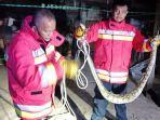 evakuasi-ular-piton-di-banda-aceh-22-maret-2021.jpg