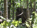 gajah-di-pidie_20180116_154740.jpg