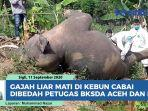 gajah-liar-mati-di-pidie.jpg