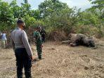 gajah-mati-di-aceh-timur-15-04-2020.jpg