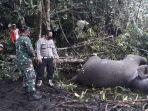 gajah-mati-di-bener-meriah_2021.jpg