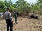 gajah-mati-di-di-gampong-seumanah-jaya-kecamatan-ranto-peureulak-aceh-timur.jpg