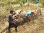 gajah-mati-di-pidie_20180814_202810.jpg