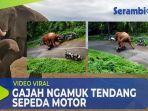 gajah-mengamuk-rusak-sepeda-motor.jpg
