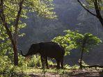 gajah-sumatera_20180122_180010.jpg<pf>orangutan_20180122_181229.jpg<pf>harimau-sumatera_20180122_181155.jpg<pf>badak-sumatera_20180122_180129.jpg