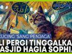 gli-kucing-hagia-sophia-mati.jpg