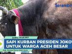 gubernur-aceh-serahkan-sapi-kurban-presiden-jokowi-seberat-102-ton-untuk-masyarakat-aceh-besar.jpg