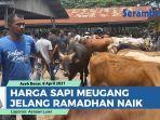 harga-sapi-meugang-jelang-ramadhan-naik-pasar-hewan-sibreh-aceh-besar-dipadati-warga.jpg