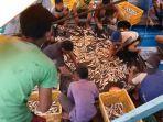 hasil-tangkapan-nelayan-pulau-banyak-melimpah.jpg