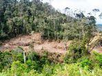 hutan-apl-di-aceh-tengah-hanya-23-persen.jpg