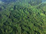 hutan-ekosistem-leuser_20180129_151257.jpg