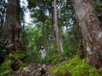 hutan-leuser-afp_20150530_230057.jpg