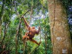 hutan-sumatera.jpg
