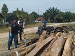 illegal-logging-milik-napi.jpg