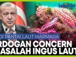 inilah-ingus-laut-yang-penuhi-pantai-laut-turki-erdogan-beri-perhatian-khusus.jpg