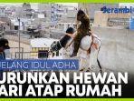 jelang-idul-adha-warga-pakistan-pindahkan-hewan-kurban-dari-atap-rumah-menggunakan-crane.jpg