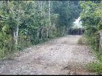 kawanan-gajah-di-pidie_20171210_124525.jpg