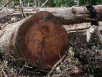 kayu-illegal_20180129_151851.jpg