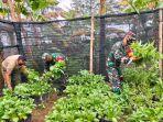 kebun-demplot-ketahanan-pangan-koramil-05samadua-kodim-0107aceh-selatan.jpg