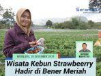 kebun-strawberry-bener-meriah.jpg