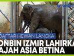 keluarga-gajah-melahirkan-gadis-ketiga-di-kebun-binatang-turki.jpg