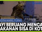 ketika-beruang-mencari-makan-di-tong-sampah-kota-turki.jpg