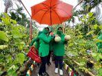 ketua-persit-kck-cabang-xxxiii-kodim-simeulue-bersama-pengurus-panen-buah-melon.jpg