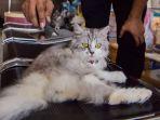 kucing-1_20171021_183239.jpg