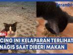 kucing-kelaparan-menagis-saat-diberi-makan.jpg