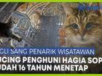 kucing-lucu-penghuni-hagia-sophia-sejak-16-tahun-silam-pernah-dibelai-erdogan-dan-obama.jpg