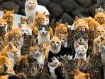 kucing_20180708_141455.jpg