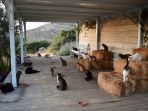 kucing_20180815_181954.jpg