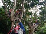 mahasiswa-simeulue-melakukan-kuliah-online-dengan-memanjat-pohon.jpg