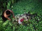 mayat-gemparkan-warga-kelurahan-sukamaju-kecamatan-binjai-barat.jpg