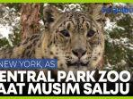 mengunjungi-kebun-binatang-central-park-as-saat-musim-dingin.jpg