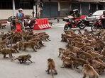 monyet-barbar-tawuran-di-jalan-bikin-lalu-lintas-macet-dipicu-rebutan-lahan-cari-makanan.jpg