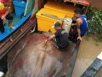 nelayan-asal-malaysia-dapat-ikan-pari-seberat-280-kilogram.jpg