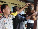 orangutan_20161205_185032.jpg