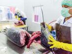pekerja-memotong-daging-tuna-kualitas-ekspor-di-ud-nagata-tuna_20180302_084655.jpg