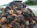 pekerja-sedang-memuat-tbs-kelapa-sawit-di-areal-kebun-babahrot.jpg