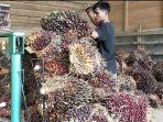pekerja-sedang-menimbang-buah-sawit-yang-dibeli-dari-petani.jpg