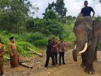 pencegahan-konflik-gajah-di-bener-meriah.jpg