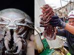 penemuan-kecoak-raksasa-di-perairan-indonesia.jpg