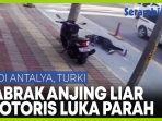 pengemudi-sepeda-motor-terluka-parah-setelah-menabrak-anjing-liar.jpg
